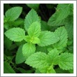 Peppermint Es.Oil